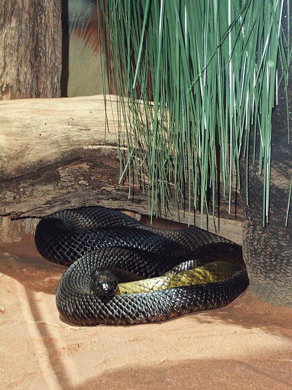 Fierce Snake