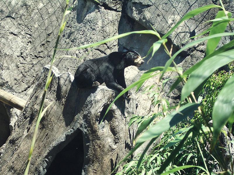 Bärenkäfig