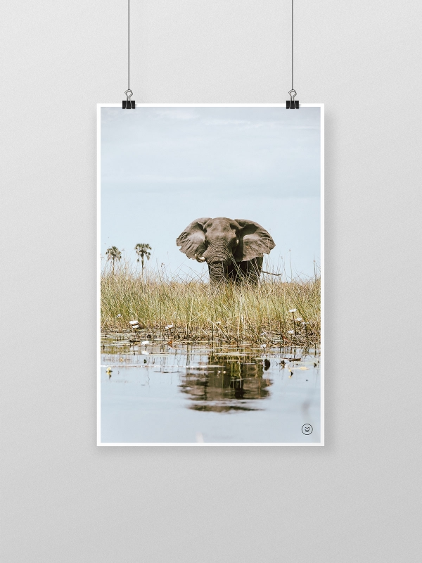 gw-shop-fineart-elephant-bull-01