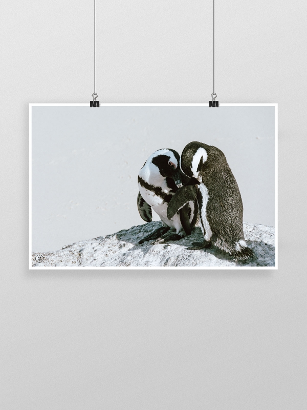 gw-shop-fineart-jackass-penguins-01
