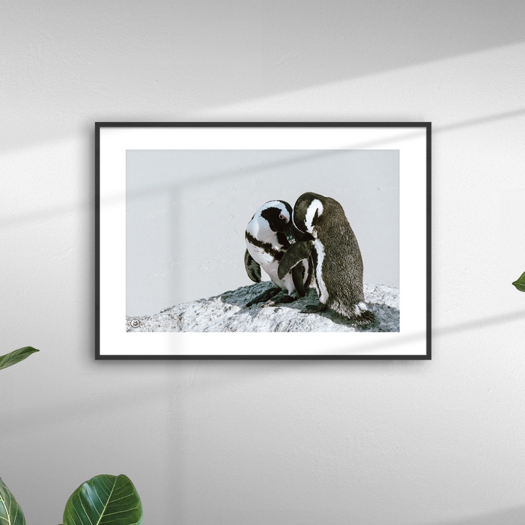 gw-shop-fineart-jackass-penguins-02