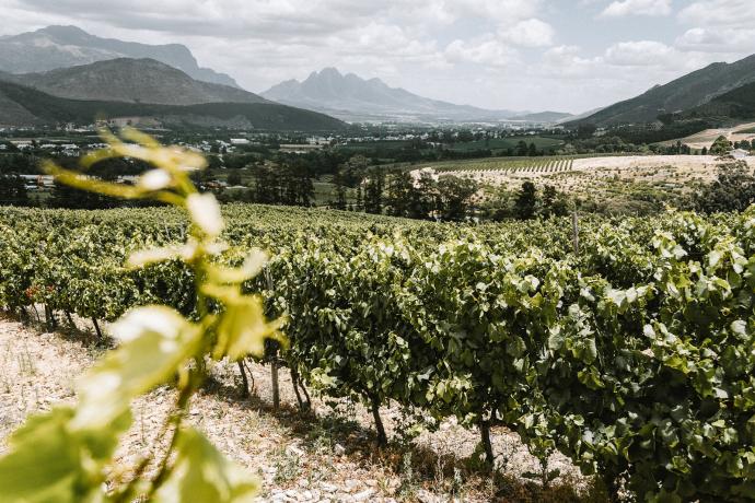 "Cape Winelands Südafrika: ""Ohlala"" a la Fronkreisch"