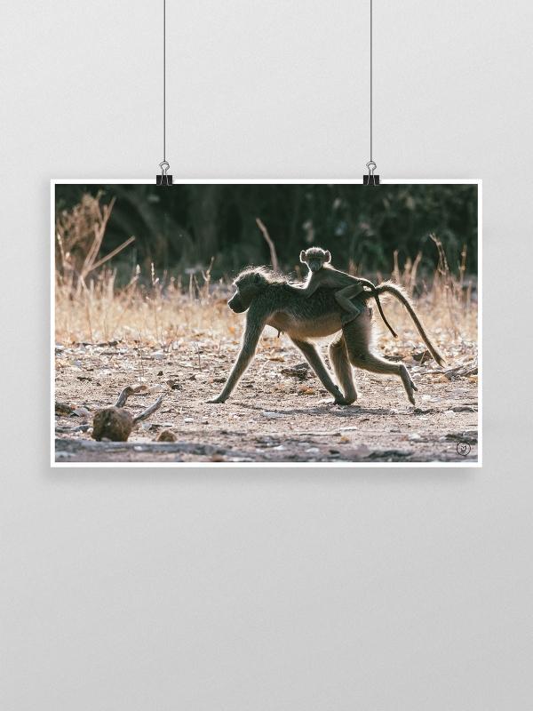 gw-shop-fineart-baboons-01