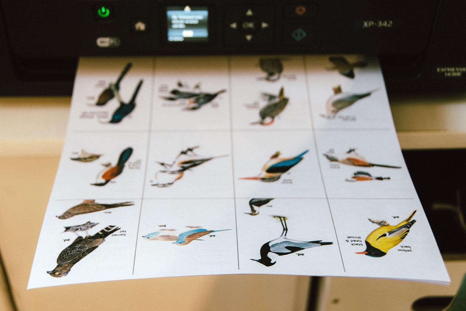 za-flashcards-birds-01-wp