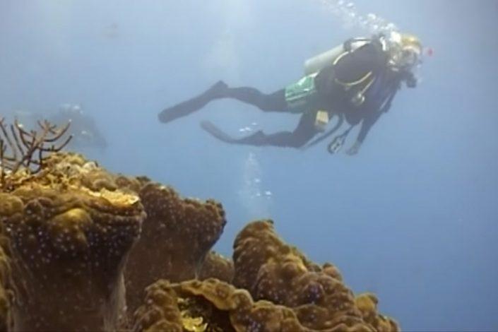 Great Barrier Reef Open Water Course