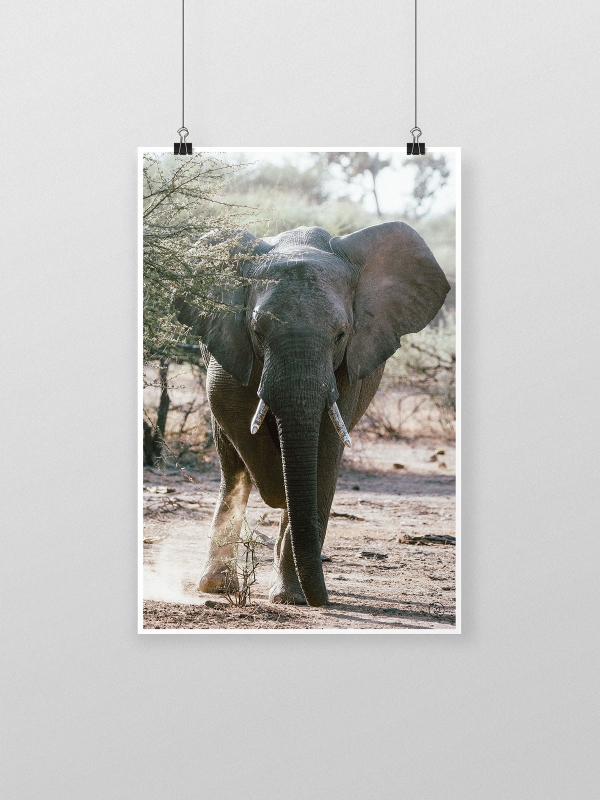 gw-shop-fineart-elephant-01