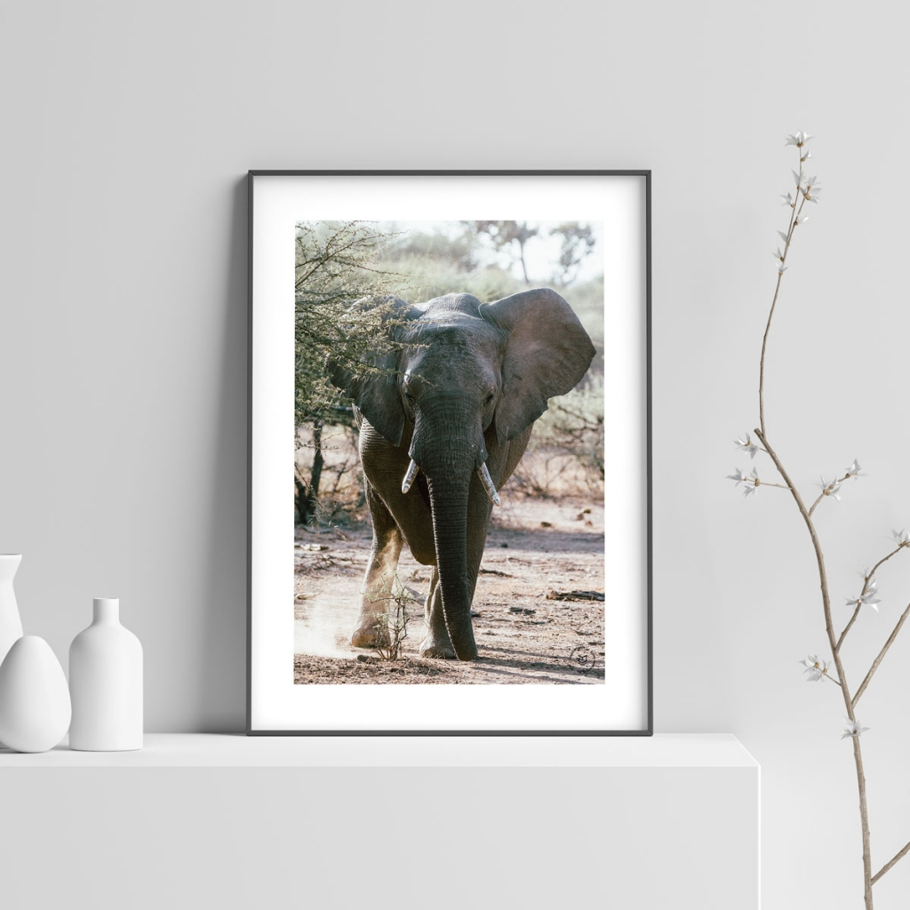 gw-shop-fineart-elephant-02