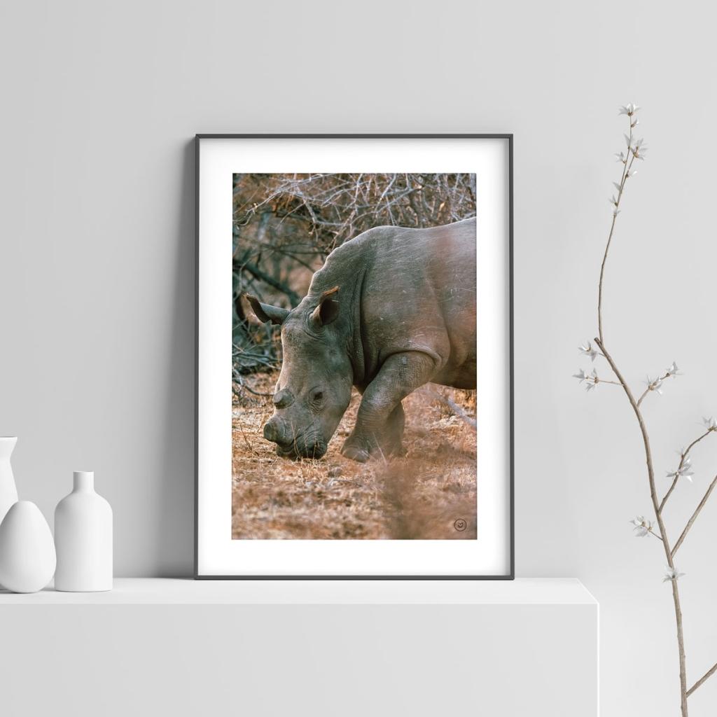 gw-shop-fineart-rhino-makuleke-02