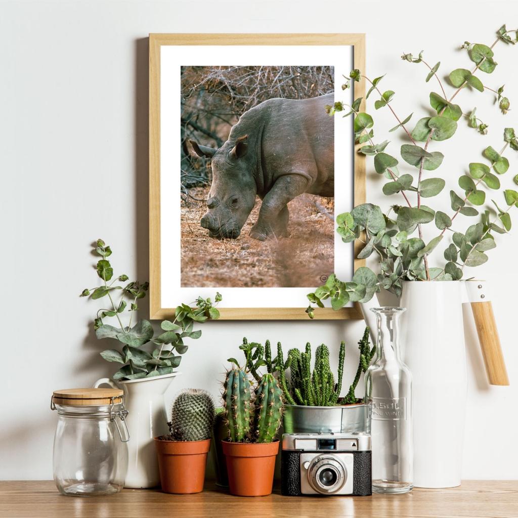 gw-shop-fineart-rhino-makuleke-03