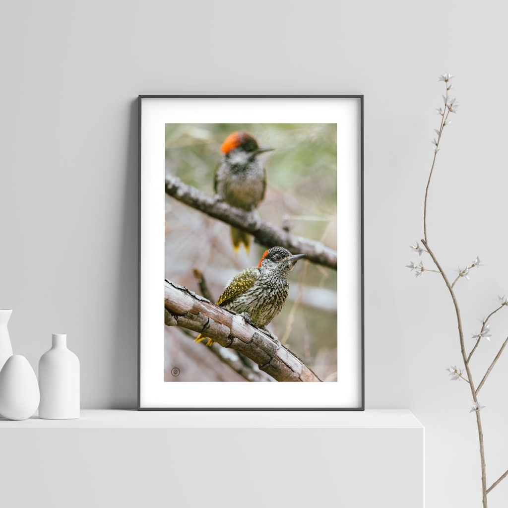 gw-shop-fineart-goldentailed-woodpecker-02
