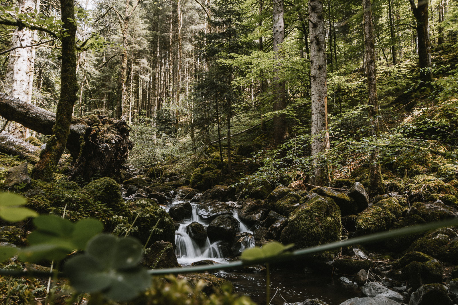 d-wildbach-tour-zweitaelerland-13