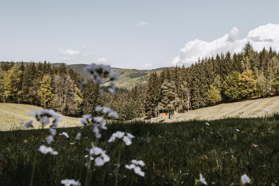 d-wandern-schwarzwald-schwangenecktour-zweitaelerland-26