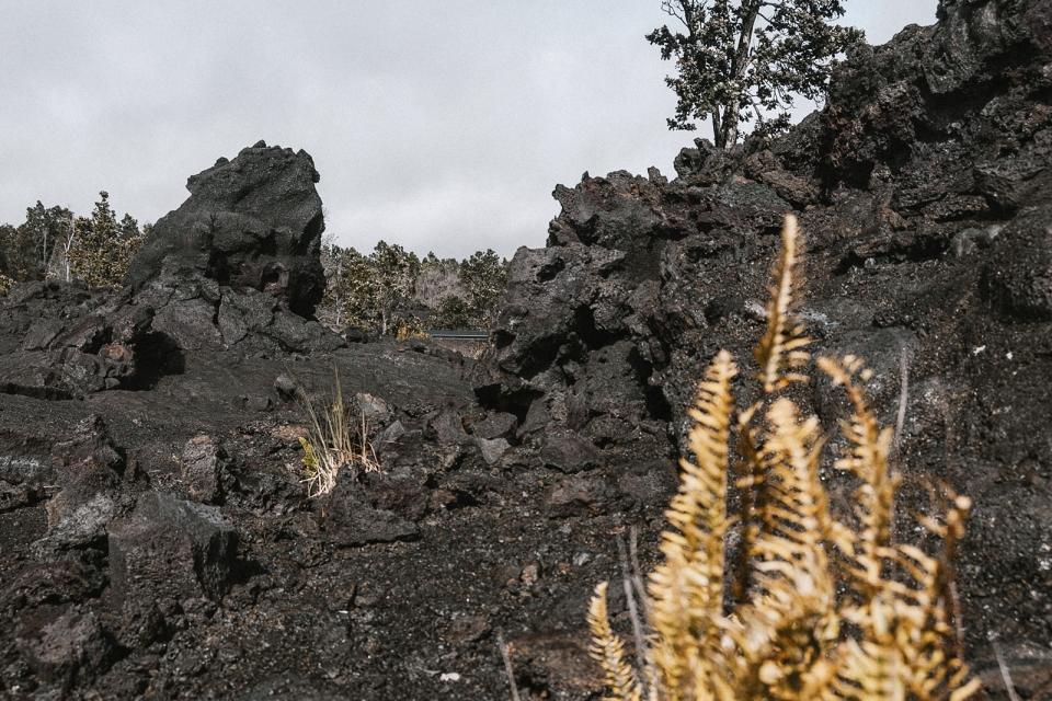 usa-hawaii-forest-trails-11-wp