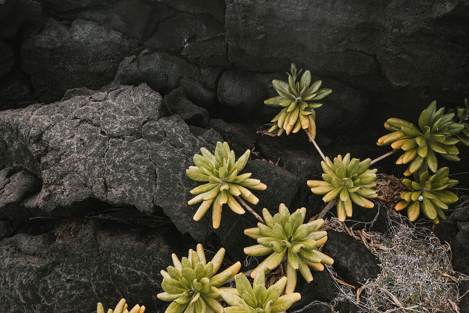 usa-hawaii-forest-trails-29-wp