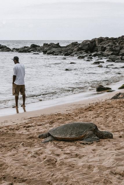 usa-oahu-polynesian-adventures-27