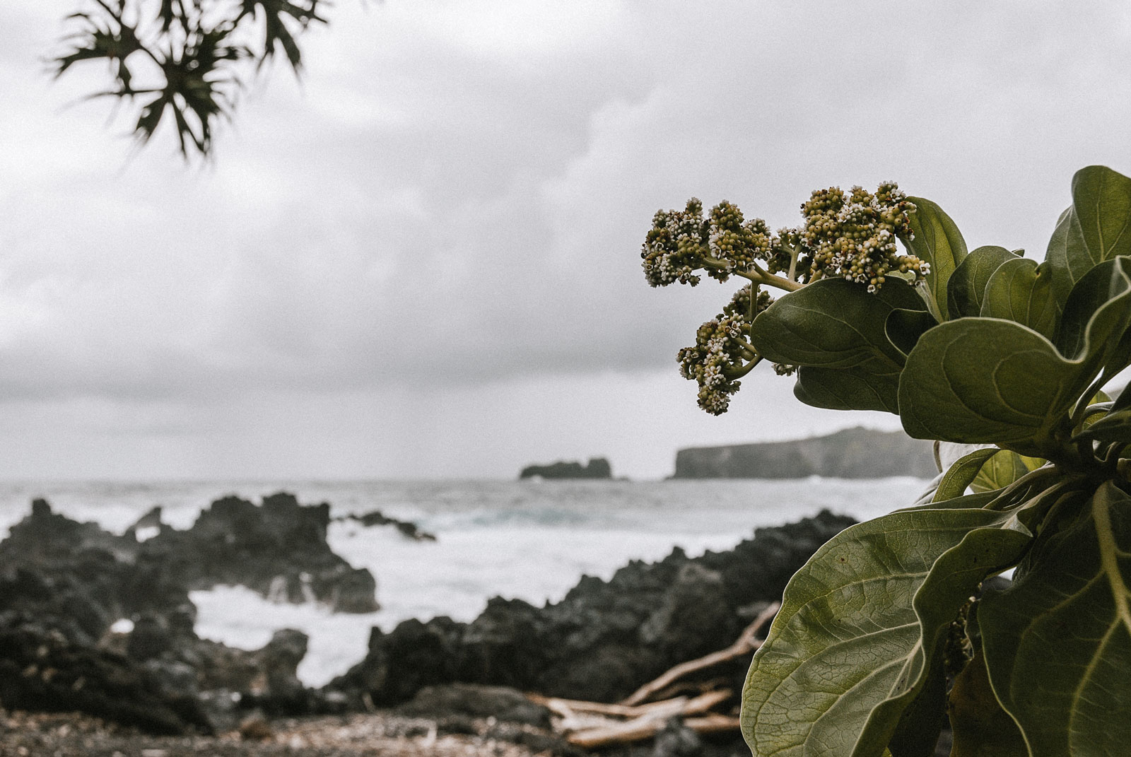 usa-roadtohana-11-wp